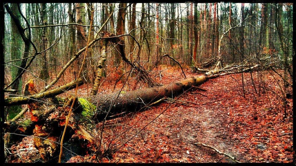 Las, rower i zwalone drzewo