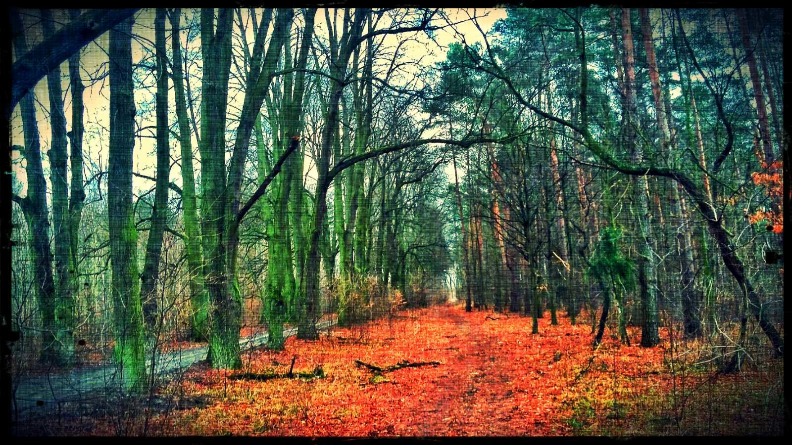Las, rower i tajemnicza ścieżka