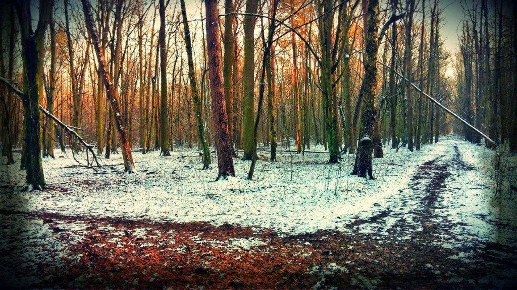 Las Młochowski zimą