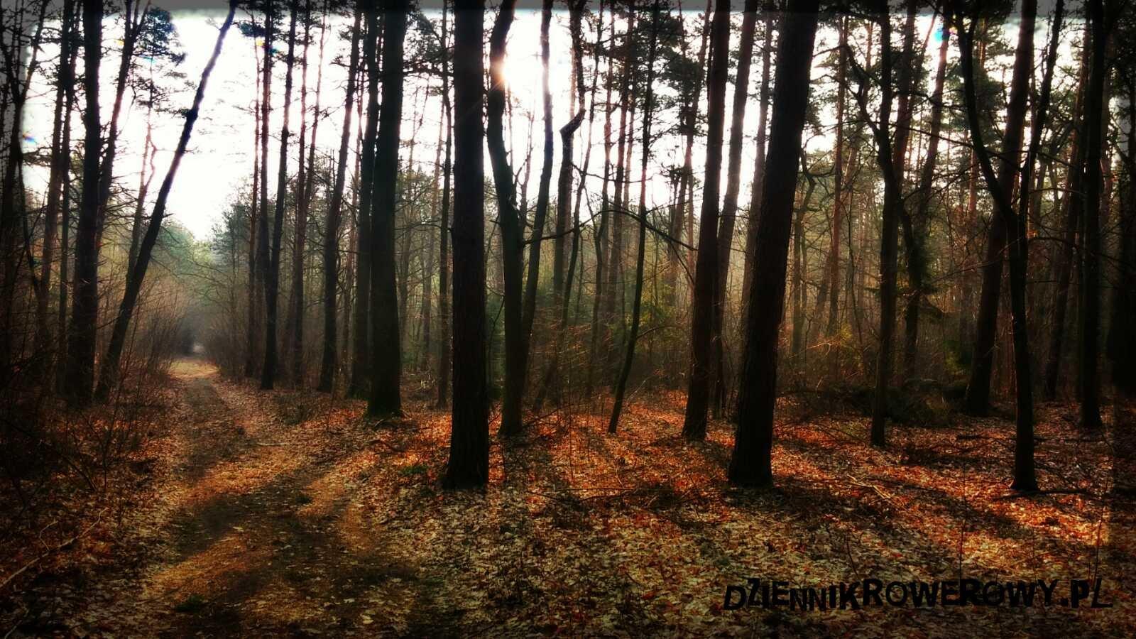 Lasy Młochowskie rowerem