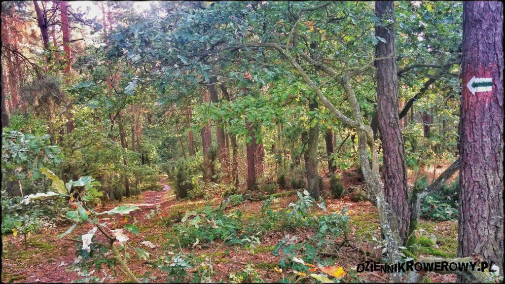 Puszcza Kampinowska- zielony szlak rowerem